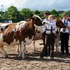 073 dairy gv