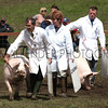 GYS 2012 Wednesday:The pig judging continues as the pigs seem very happy with the mud.<br /> pic: doug jackson