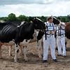 051 dairy gv