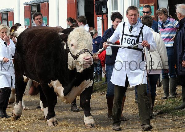 015 cattle gv