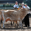 075 dairy gv