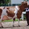089 dairy gv