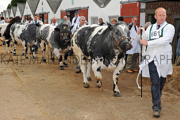 024 cattle gv
