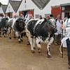 023 cattle gv