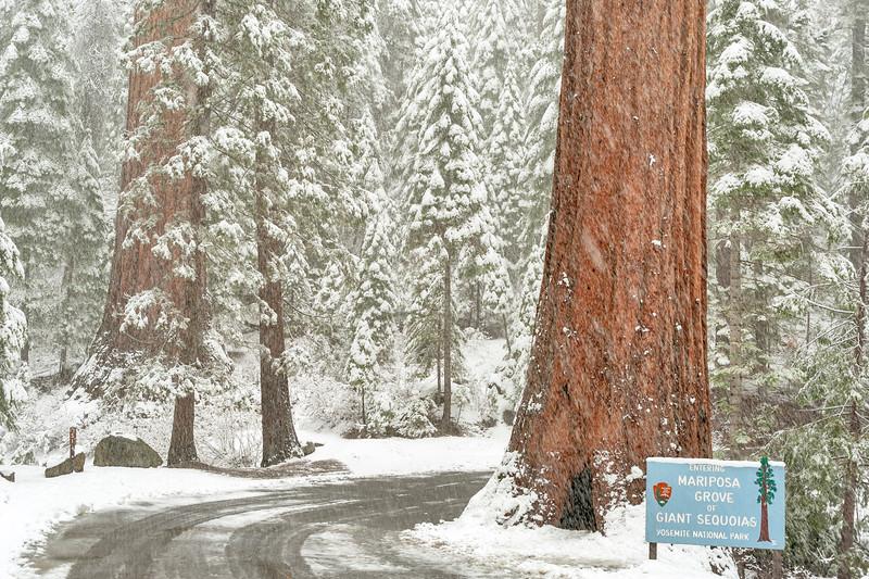 Entrance to Mariposa Grove, Yosemite National Park, CA