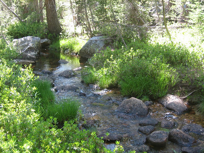 We drove back down to the main road from the trailhead parking lot, and spent a few minutes exploring the pretty stream and meadow area. © Kimberly Barnett