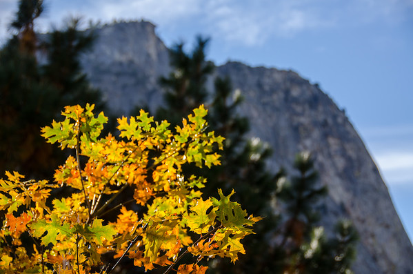 Fall colors in Yosemite