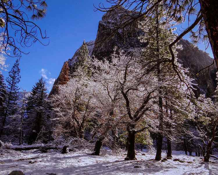 Snowy Scene near Cathedral Rocks
