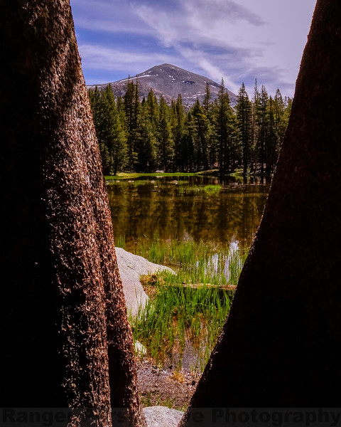 Mount Dana framed by Trees