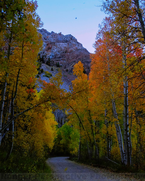 Fall on Lundy Canyon Road