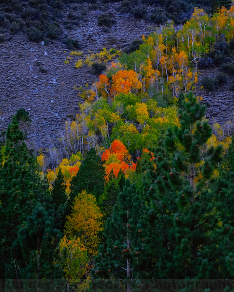 Fall in Lundy Canyon
