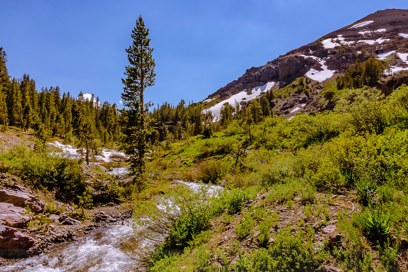 Sub-alpine Scene along Leavitt Lake Trail