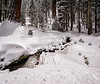 Forest Stream - Sequoia National Park, California - Jerry Negele - February 2013