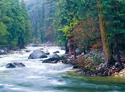 Yosemite, Merced River in the Raim