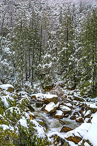 """""""Forest Chill,"""" Cascading waters of the Merced River in the Winter, Yosemite National Park, California"""
