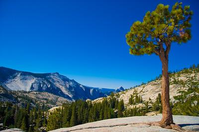 Yosemite 594e