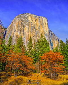 """Captain's Autumn,"" El Capitan and Dogwood Trees in the Autumn, Yosemite Valley, Yosemite National Park"