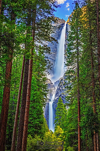 """Classic Beauty,"" Yosemite Falls through the Trees, Yosemite Valley, Yosemite National Park"