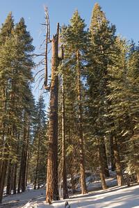 JSP 20151207 Yosemite-109
