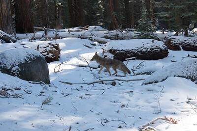 JSP 20151207 Yosemite-18