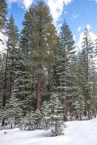 JSP 20151207 Yosemite-88