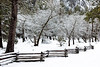 """Yosemite Valley Fence, Trees and Snow"""