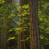 Yosemite Forest-3