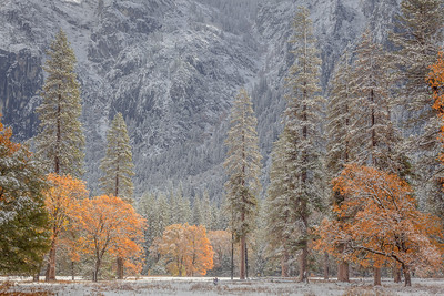 A Sense of Scale in El Capitan Meadow