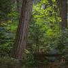 Yosemite Forest-4