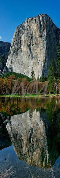 El Capitan in Yosemite Nation Park.  Nice reflection in May 2011.  The Merced River was flooded and getting higher.