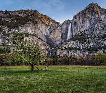 Yosemite Falls and Dogwood