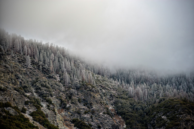 Snowy Hilltop Tunnel View - Yosemite