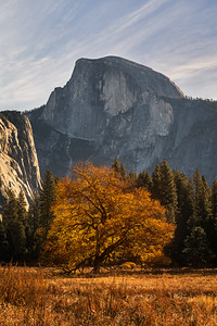 Elm fall colors and Half Dome, Yosemite National Park
