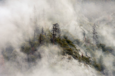 Cliffside trees in the fog, Yosemite National Park