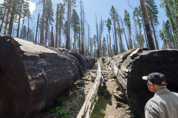 Mariposa Grove of Giant Sequoias, Yosemite National Park