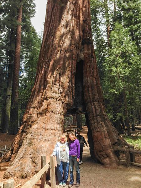 California Tunnel Tree: Mariposa Grove of Giant Sequoias