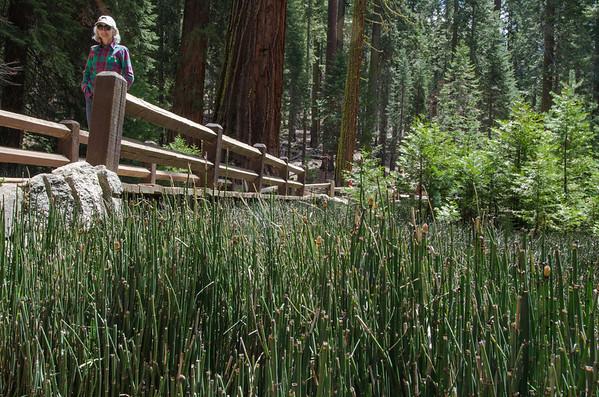 Mariposa Grove: Things to Do Near Yosemite's South Entrance