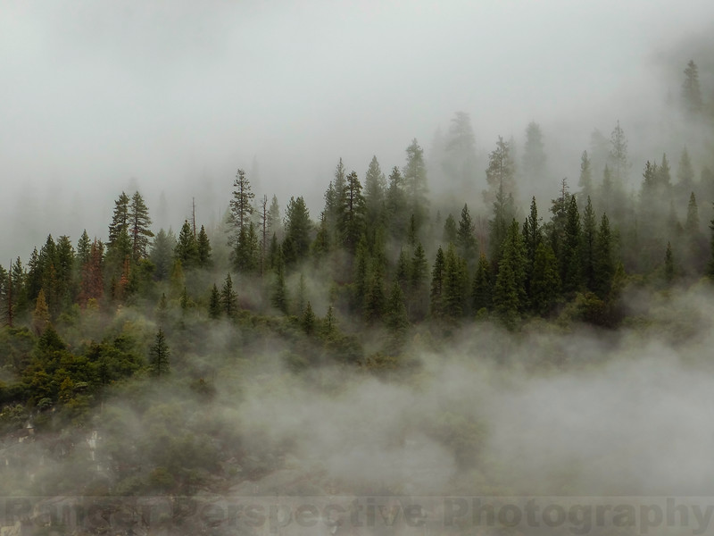 Forest emerging from the mist