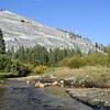 May Lake Hike