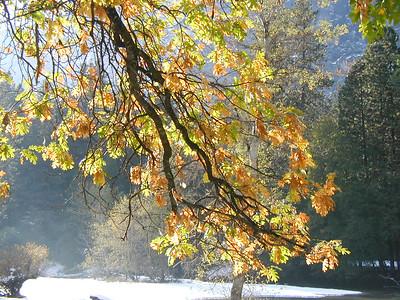 Yosemite Valley November 2003