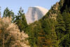 Half Dome and Spring blossoms April 2008