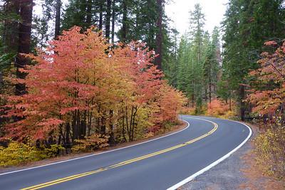 Yosemite Big Oak Flat Road, Highway 120, Nov. 2010