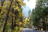 Yosemite Valley Fall Foliage
