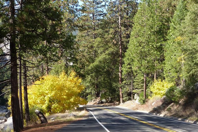 Along Highway 140 Yosemite Valley (South Drive)