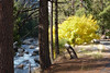 Along Highway 140 Yosemite Valley (South Drive)<br /> Merced River