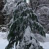 Trees along the walking path/ski trail