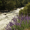 Yosemite National Park California<br /> Merced River