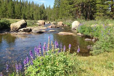 2014 July Tuolumne River between Tuolumne Meadows and Tioga Pass
