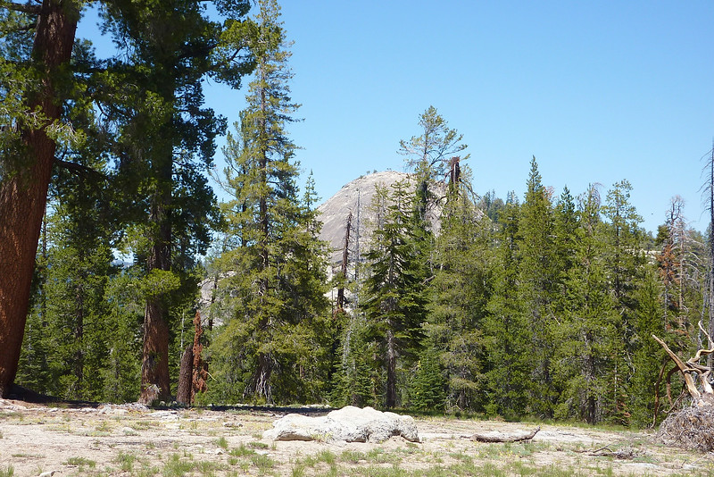 Start of the trail reveals views of Sentinel Dome.