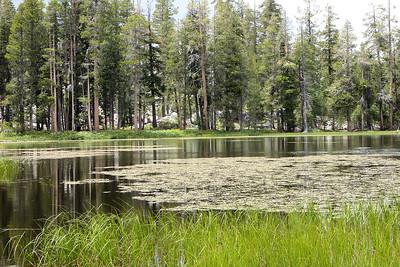 2015 July Siesta Lake.  Off Hwy 120. High Country.